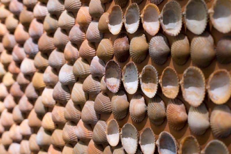 Close Up Shell Carpet Nazmiyal